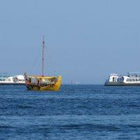 В море :: Вера Щукина