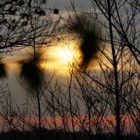 Через терни к рассвету. :: владимир