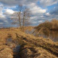мартовская река :: sergej-smv