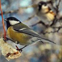 Кстати о птичках. Фото на память... :: Александр Резуненко