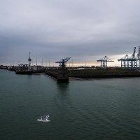 Порт Роттердама (Нидерланды) :: Valentina M.