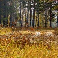 Осенними тропами. :: nadyasilyuk Вознюк