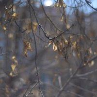 Сибирская весна :: Анна