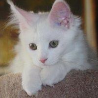 Милый котенок :: татьяна