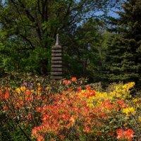 Японский сад :: Игорь Овсянников