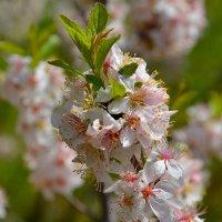 Весенние цветы. :: Валерий Медведев