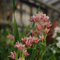 Орхидея :: Татьяна Тимофеева