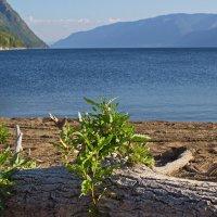 Утро на озере :: val-isaew2010 Валерий Исаев
