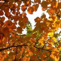 Осенью в солнечный день :: татьяна