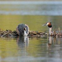 Весна на озере. :: Светлана Ивановна Медведева