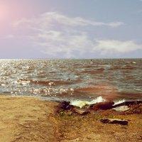 водохранилище :: linnud