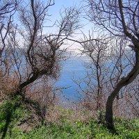 Морской пейзаж по над берегом :: Валерий Дворников