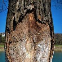 Дерево-цель :: Сергей Форос