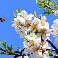 Весна пришла :: Виктор Шандыбин