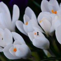 Весна :: Владимир Богославцев(ua6hvk)