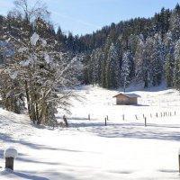 Снежное утро  в Альпах :: Николай Танаев