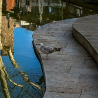 Про чайку и отражения... :: Виктор Льготин