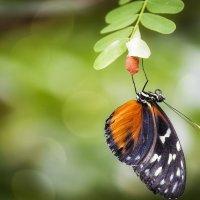 Парк бабочек в Куала-Лумпур, или красота – страшная сила! :: Александр Вивчарик