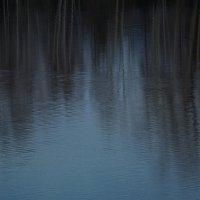штрихи на воде :: Ольга Логинова