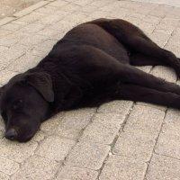 Сочинские собаки :: Валерий A.