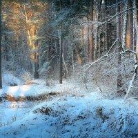 Лесной рассвет...2 :: Андрей Войцехов