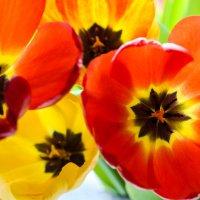 тюльпаны :: Женечка Зяленая