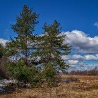 Первое апреля :: Андрей Дворников