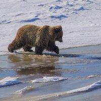 А вода то,мокрая. :: Юрий Харченко
