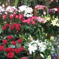В цветочном магазине. :: Татьяна
