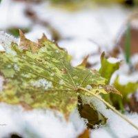 Между осенью и зимой :: Руслан Тимошенко
