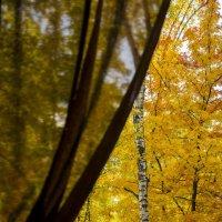 Осень в окно стучится :: Татьяна Степанова