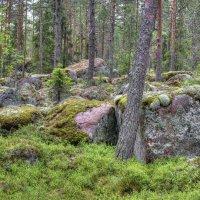 В сказочном лесу :: Константин