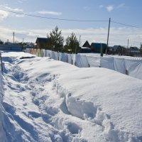 Зима. Нет - весна! :: Андрей Синицын