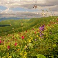 Цветы, вершины, облака :: Ольга СПб