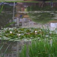 Пруд где лилии цветут :: Валерий Самородов