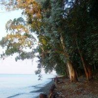 Берег Чёрного моря :: Андрей Л.