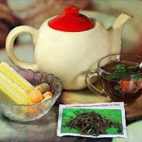 Чай из травы бессмертия джиаогулан :: Андрей Заломленков