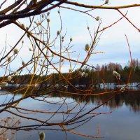 Река и верба. :: ВАЛЕНТИНА ИВАНОВА