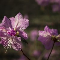 Яркий цветок. :: Svetlana