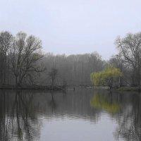 Утро туманное, утро апрельское... :: Маргарита Батырева
