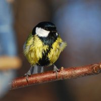 взмокла я! :: linnud
