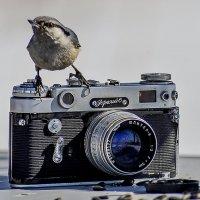 А вот и птичка . :: Евгений Ананевский