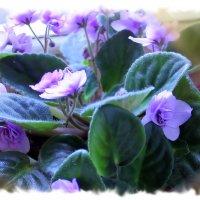 На окне весны дыханье... :: Валентина ツ ღ✿ღ