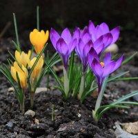Городские цветы :: Татьяна Панчешная