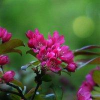 Весна :: Дмитрий Лебедихин
