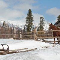 лошадь в деревне :: оксана Кудряшова
