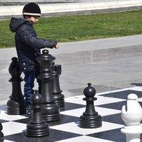 Играю в шахматы :: Oghuz alili