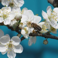 Весна... :: Вячеслав Медведев