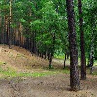Лес под Читой :: Ольга Чистякова