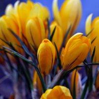 Весны этюды. Апрель... :: Александр Резуненко